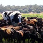 2018/11/28で気になった記事 世界最大級の「巨大牛」、体高約2メートル オーストラリア(CNN.co.jp) – Yahoo!ニュース…他