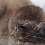2019/6/20で気になった記事 サンシャイン水族館でケープペンギンとバイカルアザラシの赤ちゃんが誕生…他